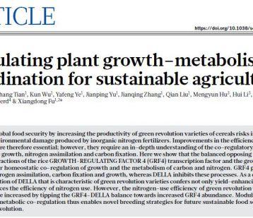 """新""""绿色革命""""或将到来:中国学者找到农作物高产少肥途径"""