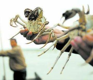 山野湖泊的路横着走,他们是你不曾知道的养蟹匠人