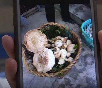 """吃了野蘑菇,一家四口中毒!提醒:""""银针试毒""""没用"""