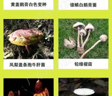 千万别吃!广东近日已有3人中毒身亡